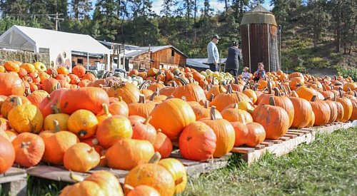 McMillan Farms to open for the season this weekend