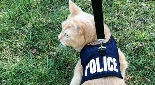 BC RCMP's April Fools' joke results in an actual police cat application
